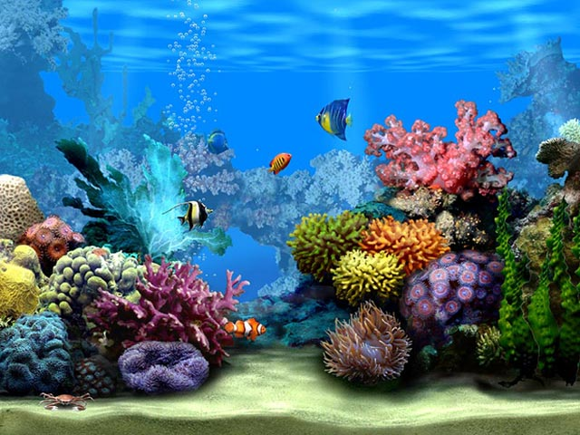Living marine aquarium 3d screensaver