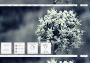 Snow Flower Rainmeter Skin