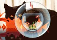 Aquarium and Cat Screensaver