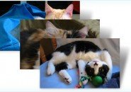 Cats anytime themepack for windows 7