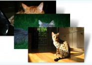 Cats everywhere themepack for windows 7