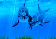 Dolphins Screensaver