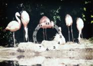 Flamingos Screensaver