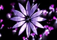 Flash Butterfly Clock Screensaver