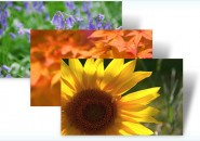 Flowers and foliage themepacks for windows 7