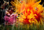 Golden Fish Screensaver