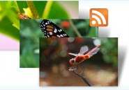 Insect themepack for windows 7