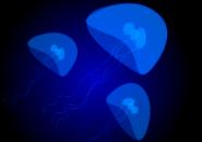 Jelly Fish Screensaver