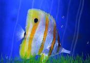 Magic Fish Screensaver