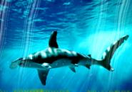 Predatory Fish Screensaver