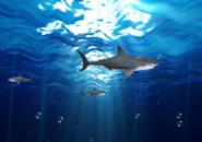 Sharks UnderWater Screensaver
