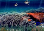 UnderWater Aquarium6 Screensaver