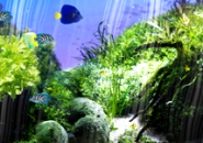 UnderWater Blue Fish Screensaver