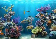 UnderWater Fish Screensaver