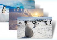 antartica themepack for windows 7