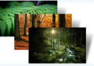 forest themepack for windows 7
