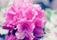 Flowers Paint2 Screensaver
