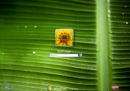 Banana Leaf Logon Screen for Windows7