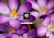 Purple Crocuses Logon Screen for Windows7