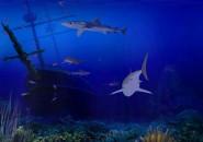 Living 3D sharks
