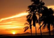 Tropical scenes