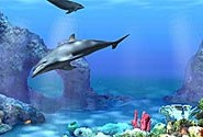 living 3D dolphins
