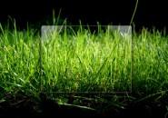 Grassy Logon Screen