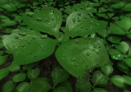 Leaf Clover 3D Screensaver