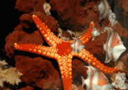 Starfish 3D Screensaver