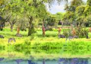 African Animal Screensaver