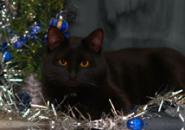 Cat New Year Screensaver
