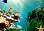 Color Fishes and Star fish Screensaver