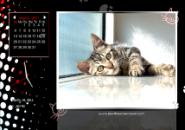 Cool Cats Screensaver