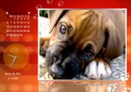 Cool Dogs Screensaver