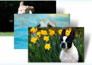 Dogs in summer themepack for windows 7