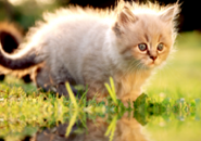 Kittens Screensaver