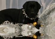 New Year Dog Screensaver