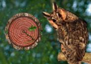 Owl Watch Screensaver