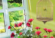 Parrot In Roses Screensaver