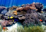 Underwater Aquarium Screensaver