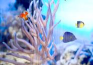 Underwater Aquarium5  Screensaver