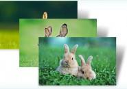 bunnies themepack for windows 7