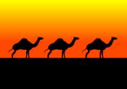 camels Screensaver