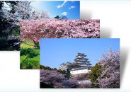 cherry blossom themepack for windows 7
