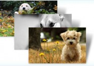 dogs in winter themepack for windows 7