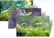 saplings themepack for windows 7