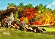 Autumn Mushrooms Screensaver