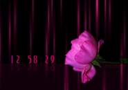 Pink Rose Screensaver