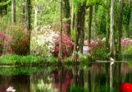 Wood Landscape Screensaver