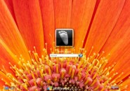 Orange Flower Logon Screen for Windows7